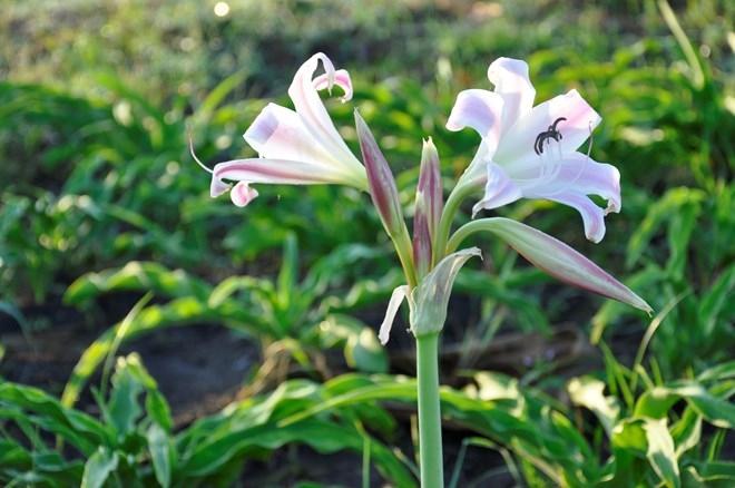 Top 3 bài thuốc nam chữa viêm cổ tử cung có sẵn trong vườn nhà